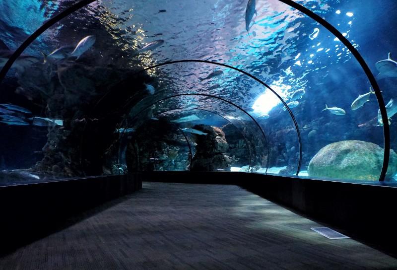 aquarium-date-night-ideas