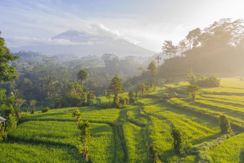 Bali-backdrop