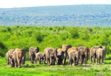 elephants-tau-game-lodge