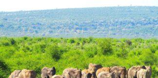 elephants-tau-game-lodge