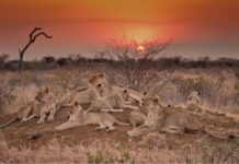 royal-madikwe-game-reserve