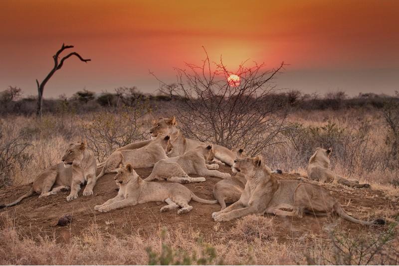 royal-madikwe-game-reserve
